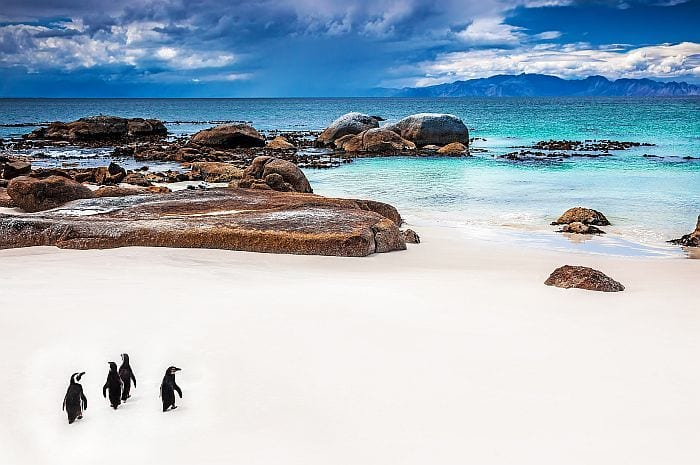 Whjat to do with children in Cape Town - Boulders Beach penguins