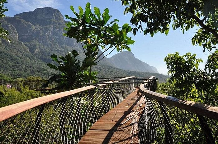 Things to do with Kids in Cape Town - Kirstenbosch gardens skywalk