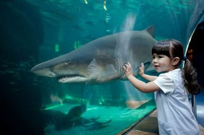 top 10 Things to do with kids in Cape Town - Aquarium