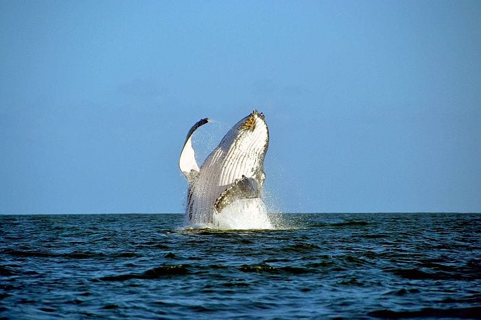 Madagascar attractions whale watching
