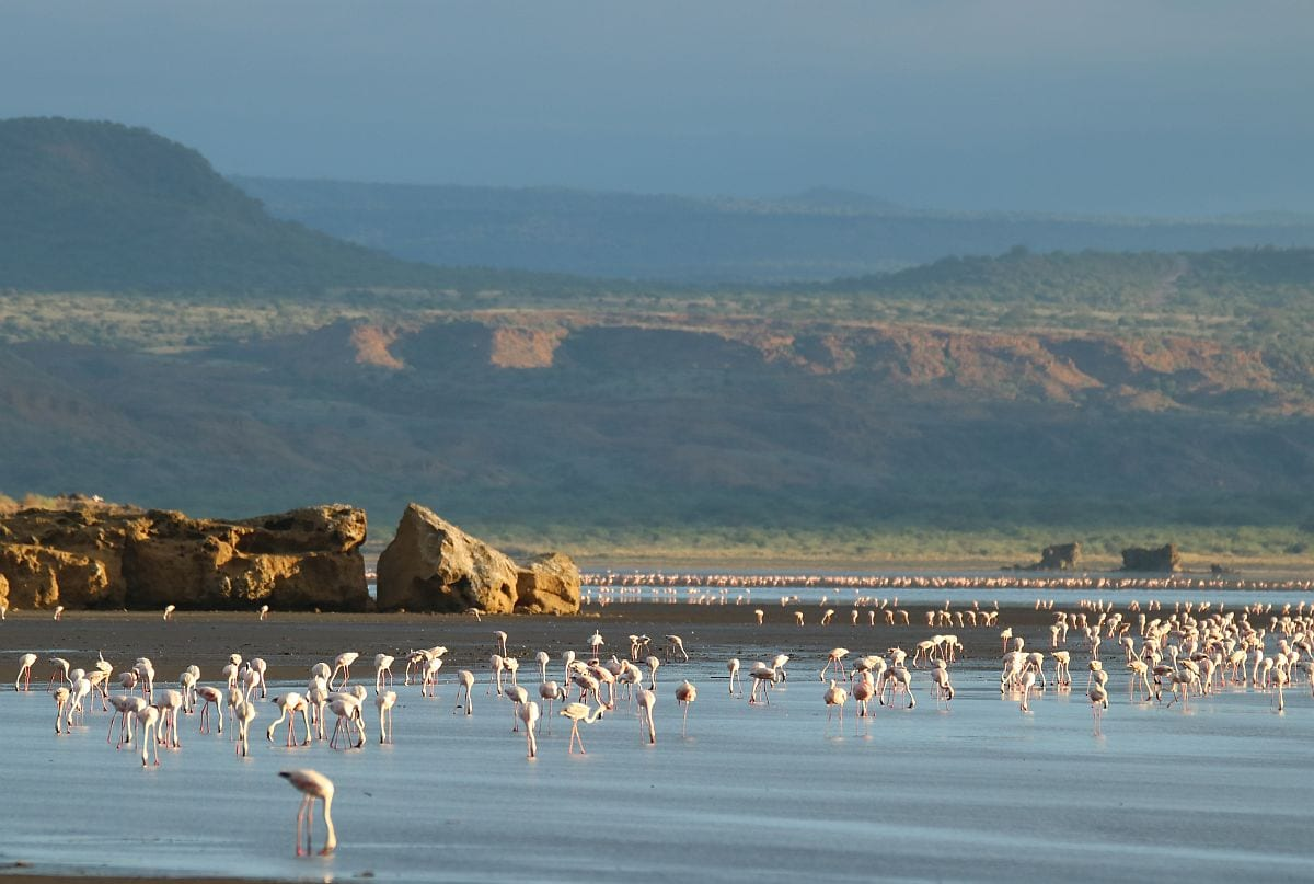lake natron flamingos scenic
