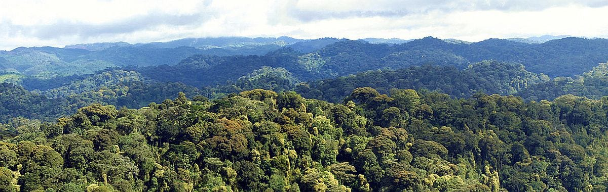 Nyungwe forest panorama