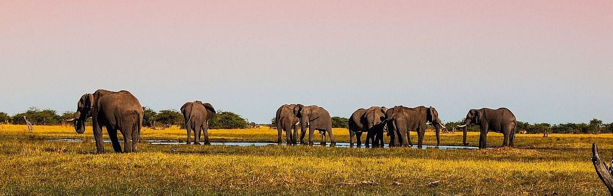 What is the cost of Botswana safari - Elephant in Savute