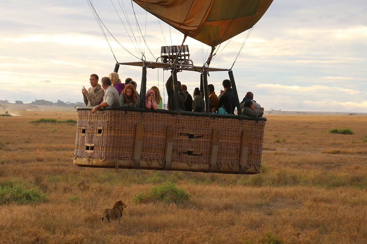Lion whilst in a hot air balloon
