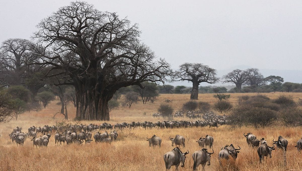 Best time to see the Wildebeest migration