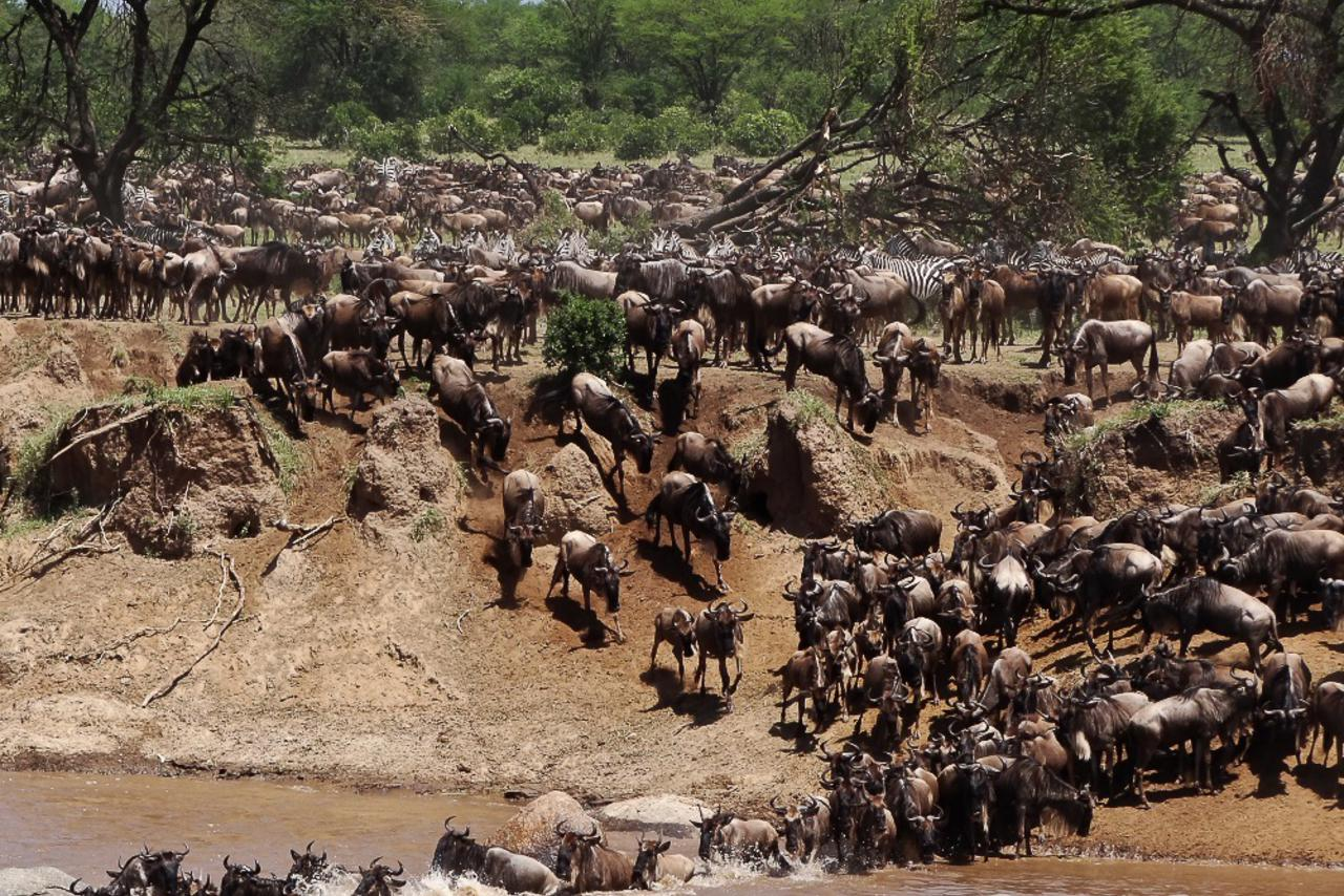 Lamai Serengeti, Tanzania - Between July and October, the migration arrives in dramatic style. Lamai is just a 30minute game drive from this.