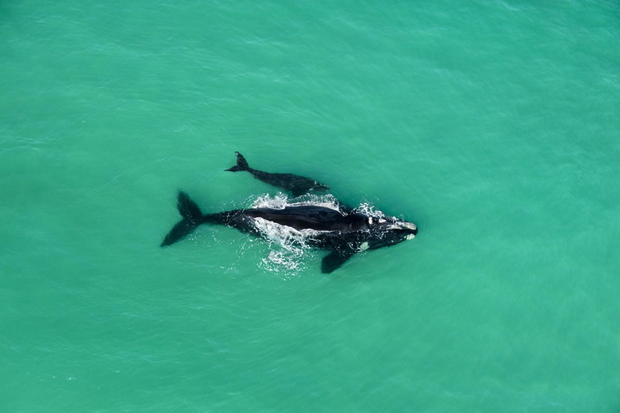 Whale watching by air